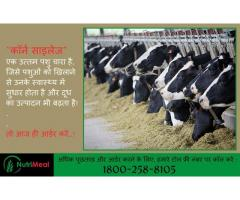 Silage for Buffaloes