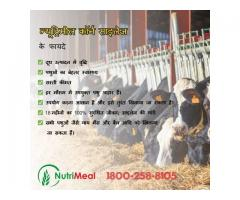 Increase Cow Milk Production