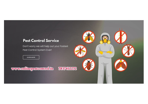 Pest control services Chandigarh