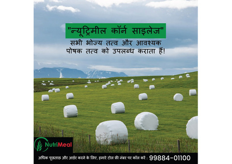 Silage Supplier in Haryana